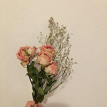 お花の画像(背景白に関連した画像)