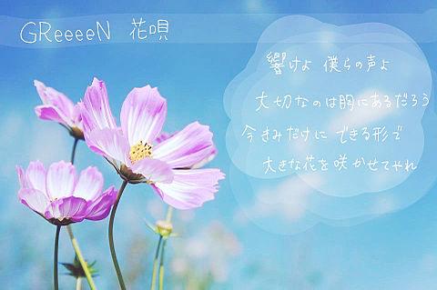 花唄の画像(プリ画像)