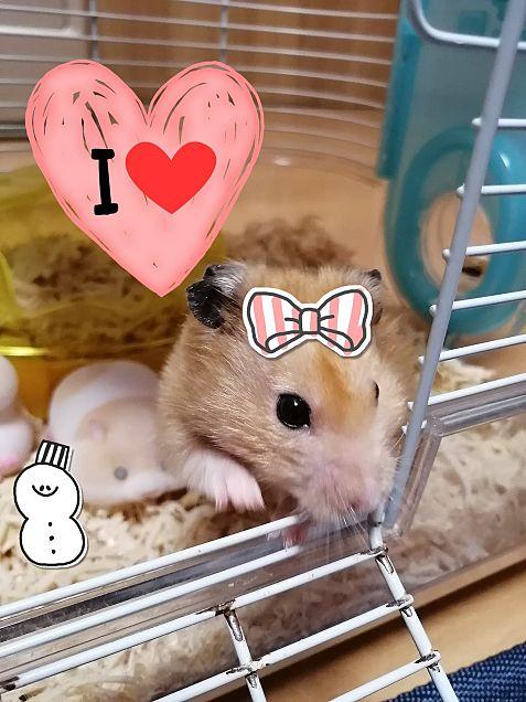 ハムちゃん♥の画像(プリ画像)