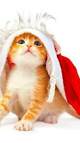 猫 リス 犬 虎の画像(叶わない苦しい笑顔ゆめに関連した画像)