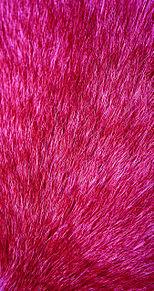 ピンクの画像(トーク背景 かわいいに関連した画像)