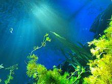 水族館 プリ画像