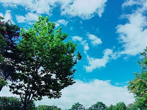 青い空の画像(プリ画像)