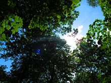 森 プリ画像
