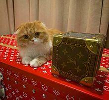 ヒカキン猫 まるお  もふこの画像(ヒカキンに関連した画像)
