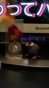 野球の銀メダル×鳥の画像(銀メダルに関連した画像)