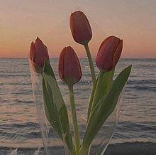 薔薇の画像(#韓国/オルチャンに関連した画像)