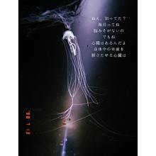 海月の心臓の画像(水族館に関連した画像)