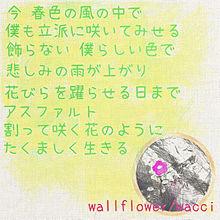 wallflower/wacci プリ画像