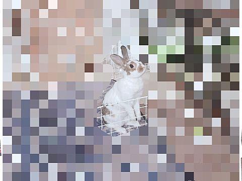 うさぎの画像(プリ画像)