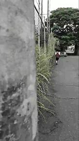 後ろ姿の画像(プリ画像)
