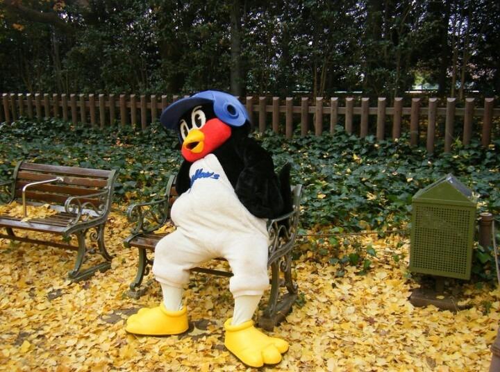秋の公園でぐったりしているつば九郎です。