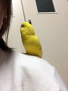 my pet・:+°の画像(PETに関連した画像)