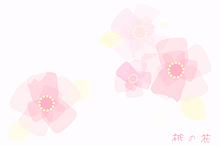 ひな祭り🎎(桃の花画像) プリ画像