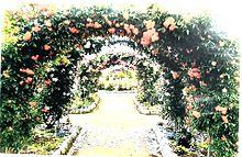 薔薇園🌹 プリ画像