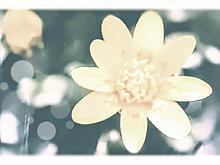 壁に飾られる花写真📷️(詳細読💦) プリ画像