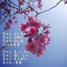 Berryz工房 歌詞画の画像(プリ画像)