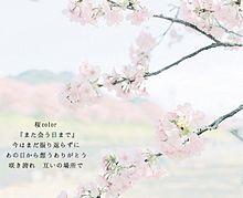 桜colorの画像(両思い/両想い/片思い/片想いに関連した画像)