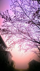 桜咲く頃の画像(夕暮れに関連した画像)