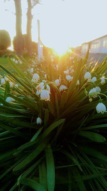 夕日と花の画像(プリ画像)