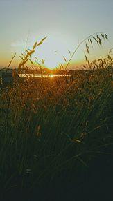 STAY GOLDの画像(夕暮れに関連した画像)