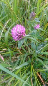 5月に撮った花(中編)の画像(自然に関連した画像)