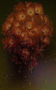 花と窓ガラス プリ画像
