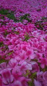 5月に撮った花(後編) プリ画像