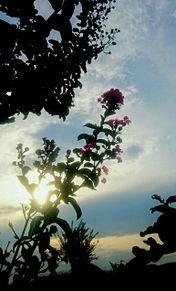 夕日 街路樹 シルエット プリ画像