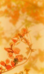 ほんのり秋色の画像(ハナミズキに関連した画像)