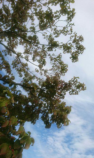 空とはなみずきの画像(プリ画像)