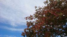 空とはなみずき プリ画像