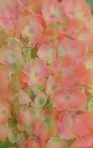 🌼 ……花……🌼 プリ画像