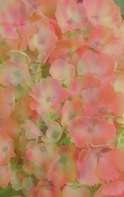 🌼 ……花……🌼の画像 プリ画像