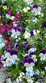 花………… プリ画像