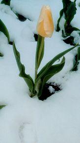 季節外れの雪の日の画像(花壇に関連した画像)