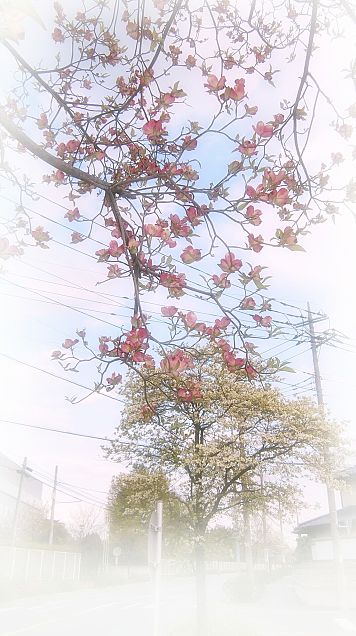 日常写真  (春)の画像 プリ画像
