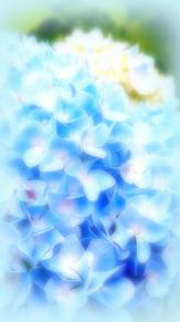 紫陽花の画像(お花に関連した画像)