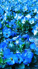 青に恋するの画像(きれいに関連した画像)