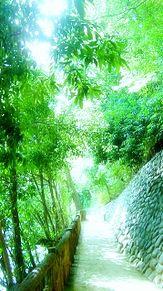 グリーンの画像(木漏れ日に関連した画像)