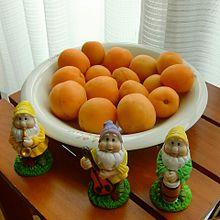 杏子(あんず) 収穫の画像(杏子に関連した画像)