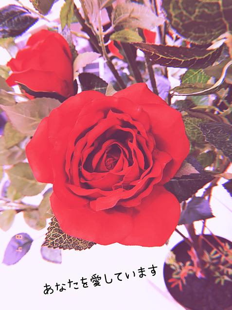 花言葉の画像(プリ画像)