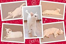Hello Kitty & あなごちゃんの画像(プリ画像)
