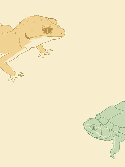 カメとトカゲの画像(プリ画像)