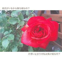 恋愛の画像(赤に関連した画像)