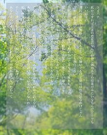 コイバナの画像(恋バナに関連した画像)