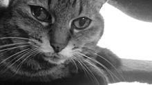 猫…保存はフォローから🐱 プリ画像