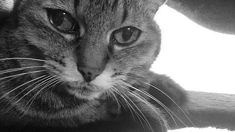 猫…保存はフォローから🐱の画像(プリ画像)