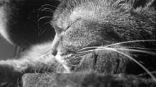 猫…保存はフォローから🐱