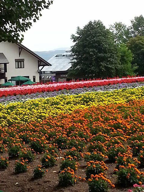 ♡富良野の花畑♡の画像(プリ画像)